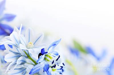 Deer Resistant Flowers Photograph - Beautiful  Blue Flower Art by Boon Mee