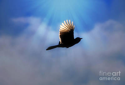Photograph - Beautiful Blue Jay In Flight Silhouette by Peggy Franz