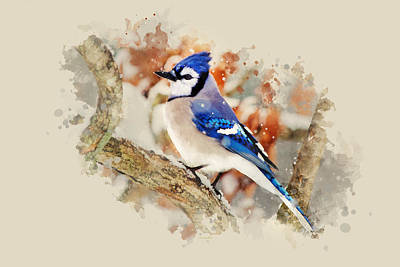 Bluejay Mixed Media - Beautiful Blue Jay - Watercolor Art by Christina Rollo