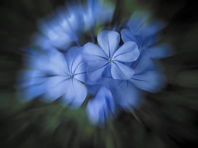 Photograph - Beautiful Blue by Penny Lisowski
