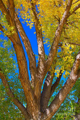 Beautiful Blue Sky Autumn Day Art Print