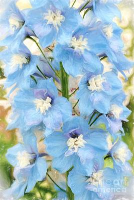 Photograph - Beautiful Blues by Peggy Hughes