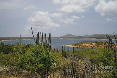 Photograph - Beautiful Bonaire by Patricia Hofmeester
