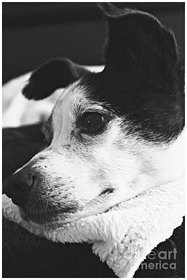 Pet Photograph - Beautiful Boo by Clare Bevan