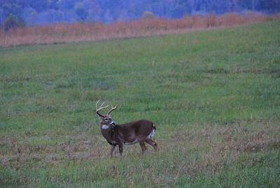 Beautiful Buck In The Smoky Mountains Print by Dan Sproul
