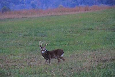 Beautiful Buck In The Smoky Mountains Art Print