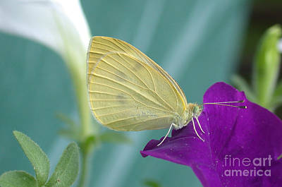 Photograph - Beautiful Butterfly Details by Living Color Photography Lorraine Lynch