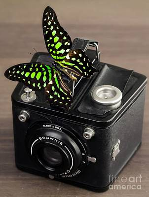 Beautiful Butterfly On A Kodak Brownie Camera Art Print by Edward Fielding