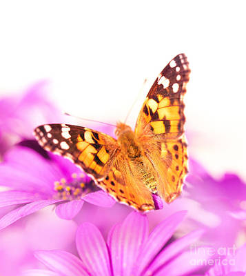 Photograph - Beautiful Butterfly On The Flower by Anna Om