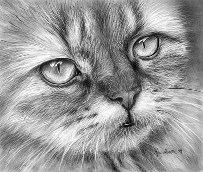 Black And White Art Drawing - Beautiful Cat by Olga Shvartsur