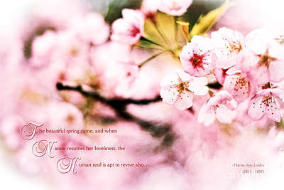 Photograph - Beautiful Cherry Blossoms In Spring When Nature Resumes Her Love by Beverly Claire Kaiya