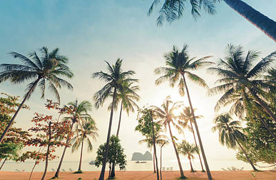 Photograph - Beautiful Coconut Tree At The Beach by Primeimages