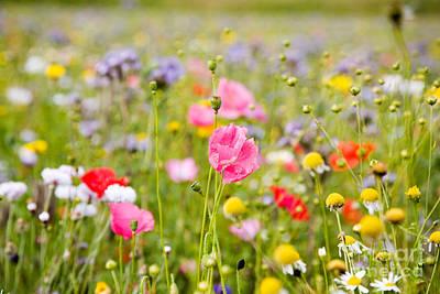 Beautiful Colorful Flowers Art Print