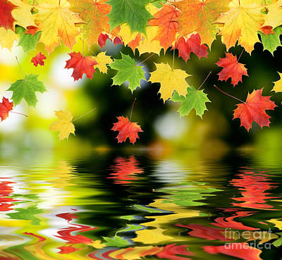 Beautiful Colorful Leaves Print by Boon Mee