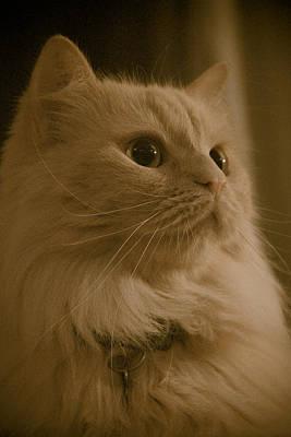 Lovable Digital Art - Beautiful Creamy Persian Cat Mix Portrait by Eti Reid