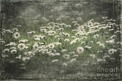 Beautiful Daisies Art Print by Svetlana Sewell