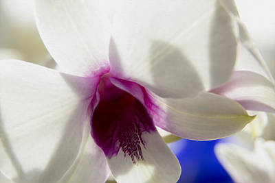 Photograph - Beautiful Dendrobium Orchid by Dana Moyer