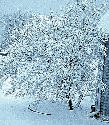 Photograph - Beautiful Early Morning Snow by Kay Novy