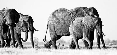 Beautiful Elephant Black And White 55 Art Print