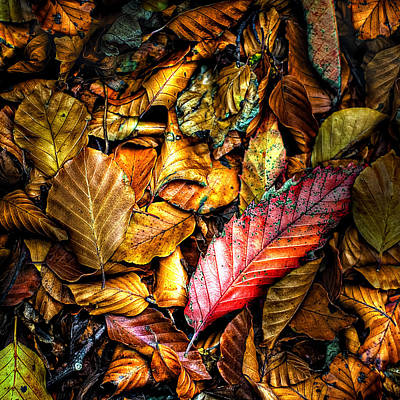 Autumn Leaf Photograph - Beautiful Fall Color by Meirion Matthias