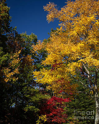 Photograph - Beautiful Fall by Dale Nelson