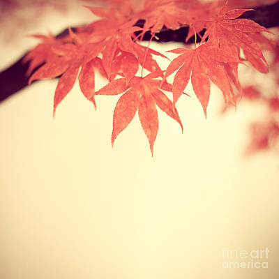 Beautiful Fall Art Print
