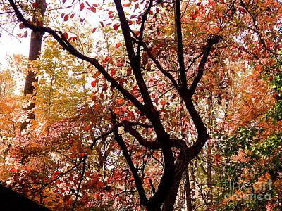 Photograph - Beautiful Fall by John Potts