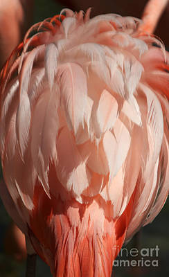 Photograph - Beautiful Feathers by Sheryl Unwin