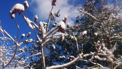 Zeni Shariff Photograph - Beautiful February Afternoon by Zeni Shariff