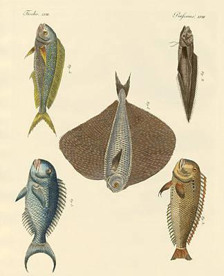 Parrotfish Drawing - Beautiful Fish by Splendid Art Prints