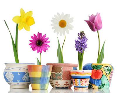 Beautiful Flower Bloom And Ceramic Art Print