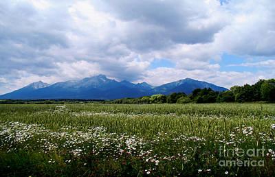Beautiful Flower Field Around Tatra Moutains Art Print by Maja Sokolowska