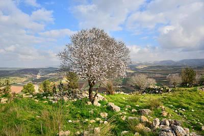 Beautiful Flowering Almond Tree Art Print