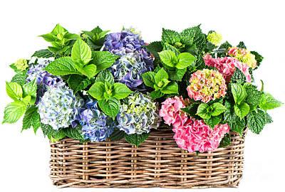 Deer Resistant Flowers Photograph - Beautiful Flowers In Basket by Boon Mee