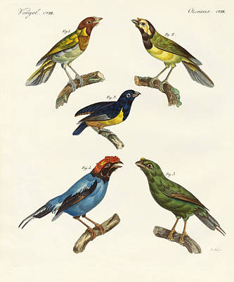 Nashville Drawing - Beautiful Foreign Birds by Splendid Art Prints