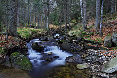 Photograph - Beautiful Forest Stream by Ivan Slosar