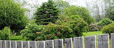 Roses Behind Fences Photograph - Beautiful Front Yard - Roses - Trees by Barbara Griffin