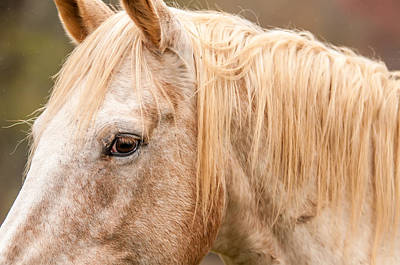 Photograph - Beautiful Gray Horse Portrait by Alex Grichenko