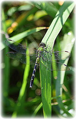 Metal Dragonfly Digital Art - Beautiful Green Dragonfly 1 by Sheri McLeroy
