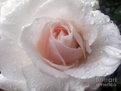 Photograph - Beautiful by Heather L Wright