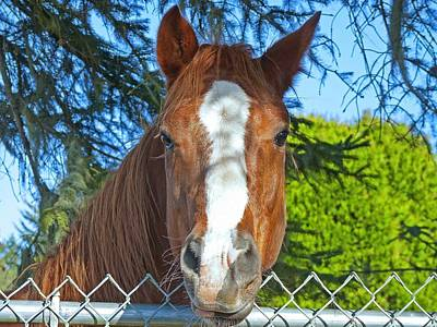 Photograph - Beautiful Horse  by Gracia  Molloy