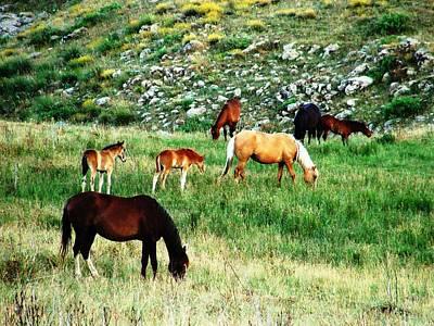 Photograph - Beautiful Horses by Faouzi Taleb