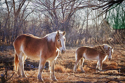 Photograph - Beautiful Horses by James BO Insogna