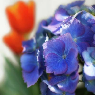 Photograph - Beautiful Hydrangea by Lisa Knechtel