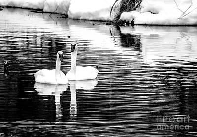 Photograph - Beautiful In Black And White by Cheryl Baxter