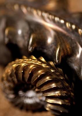 Ammolite Photograph - Beautiful Jurassic Pyrites Gold Ammonites by Paul D Stewart