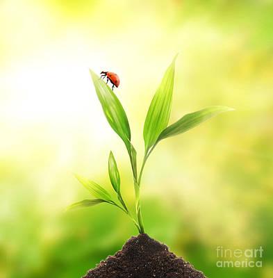 Beautiful Ladybug Print by Boon Mee