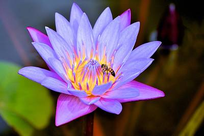 Photograph - Beautiful Lily And Visiting Bee by Kristina Deane