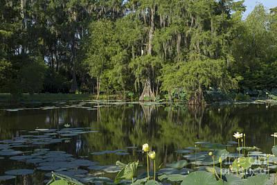 Beautiful Louisiana Swamp Original