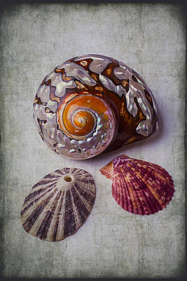 Beautiful Lovely Shells Print by Garry Gay
